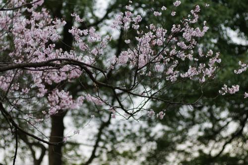 昭和記念公園(12)