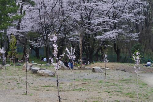 狭山公園(5)