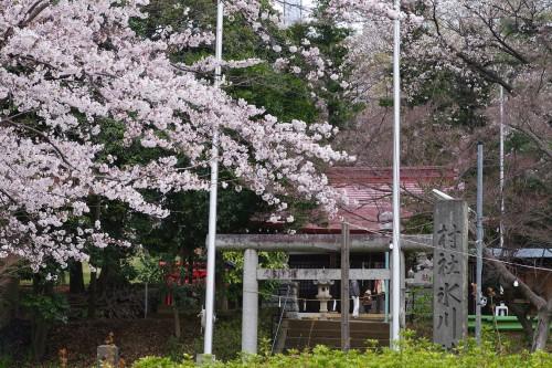狭山公園(6)