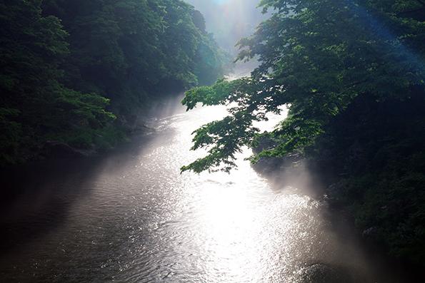 霧と光のコラボ