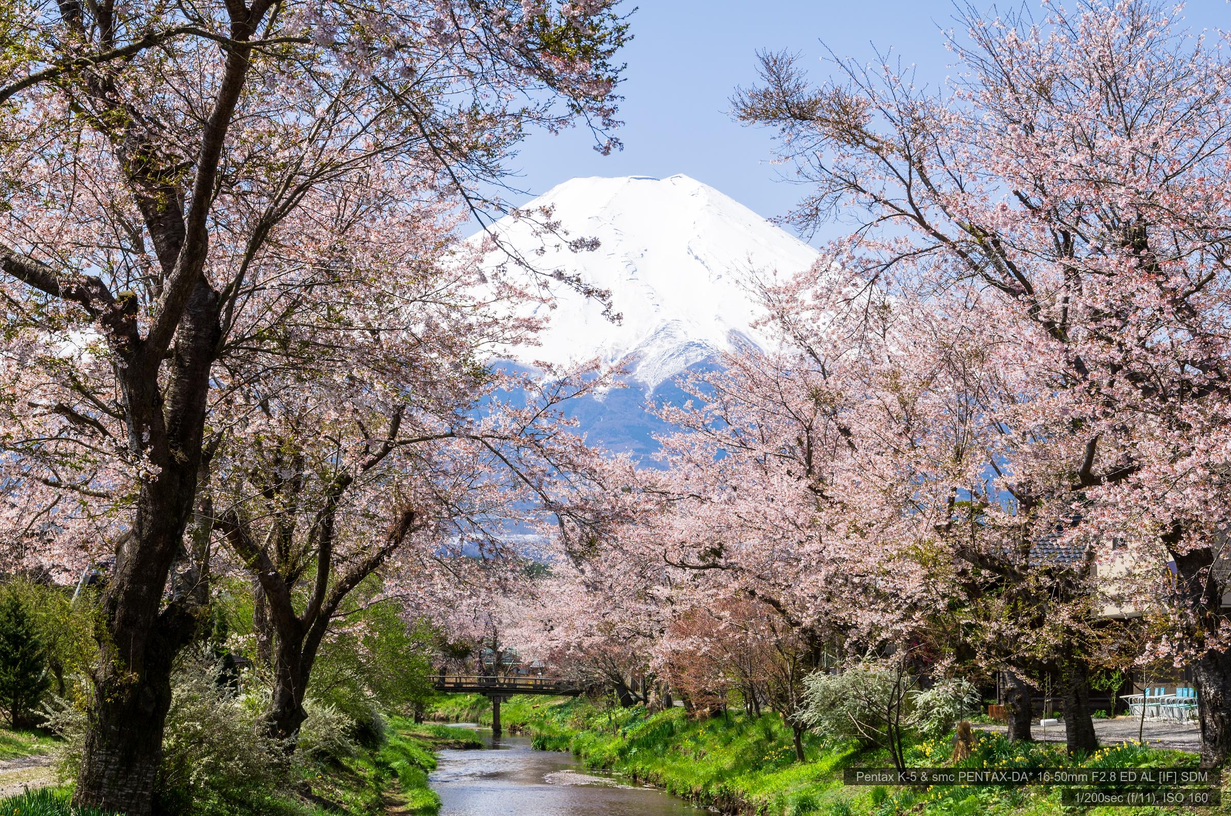 忍野村お宮橋より桜と富士山 | PENTAX K-5&DA★16-50mm