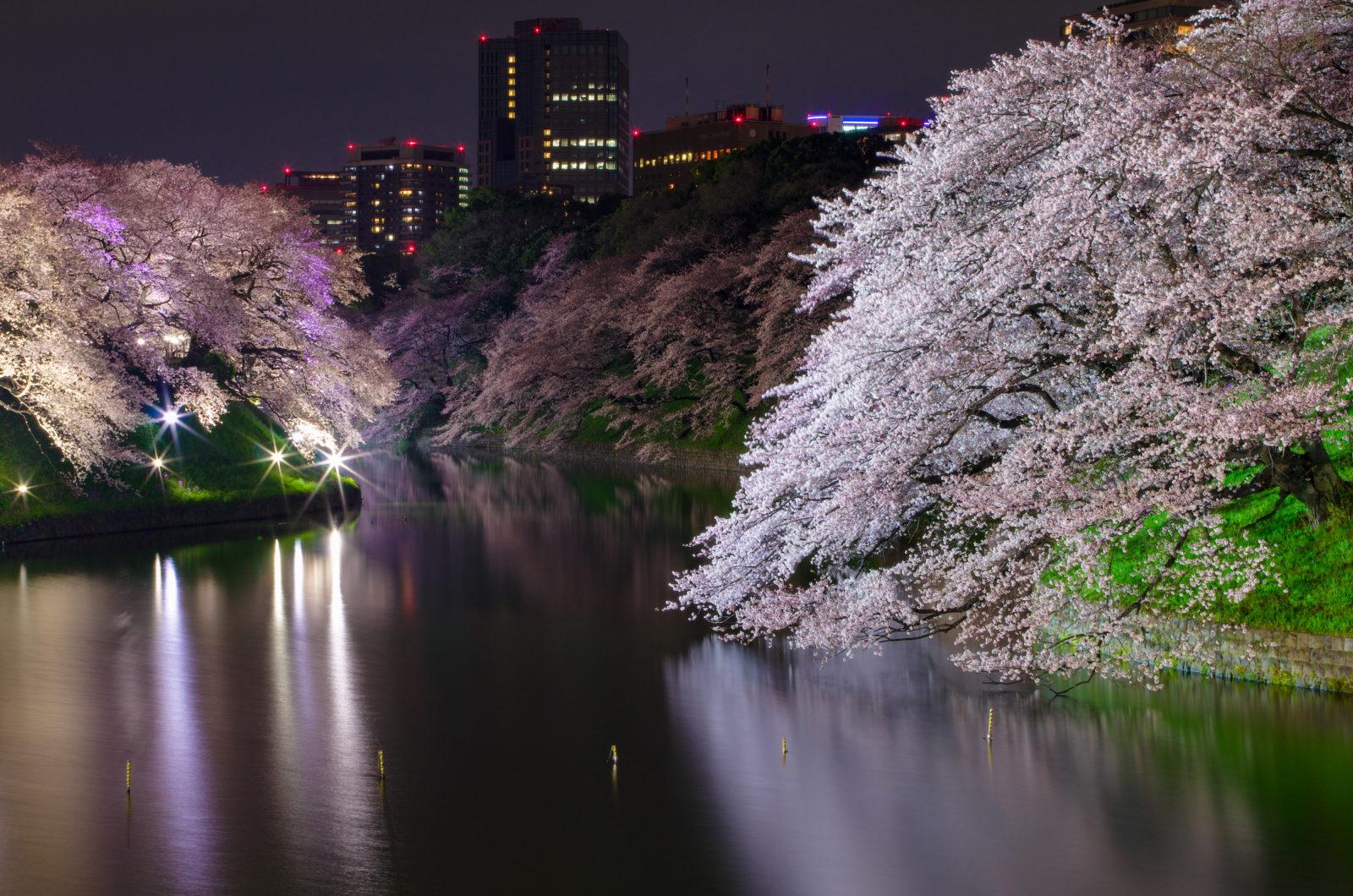 千鳥ヶ淵の桜ライトアップ2015 | PENTAX K-5IIs&FA★28-70mm