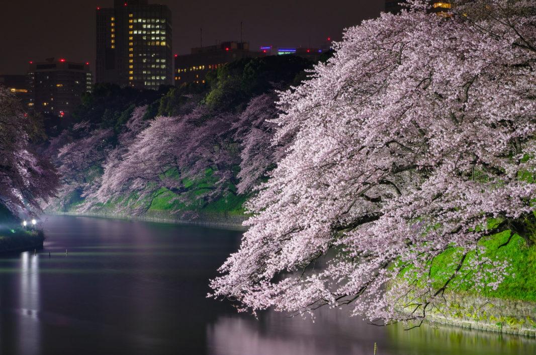 千鳥ヶ淵の桜ライトアップ2016 | PENTAX K-5IIs&FA★28-70mm