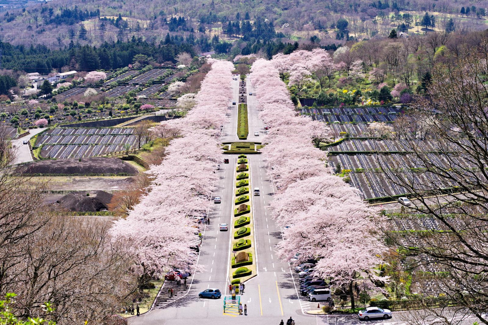 富士霊園の桜 | PENTAX K-1&D FA★70-200mm