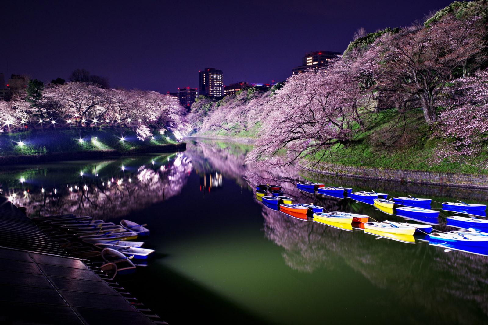 千鳥ヶ淵の桜ライトアップ | PENTAX K-1&FA35mm