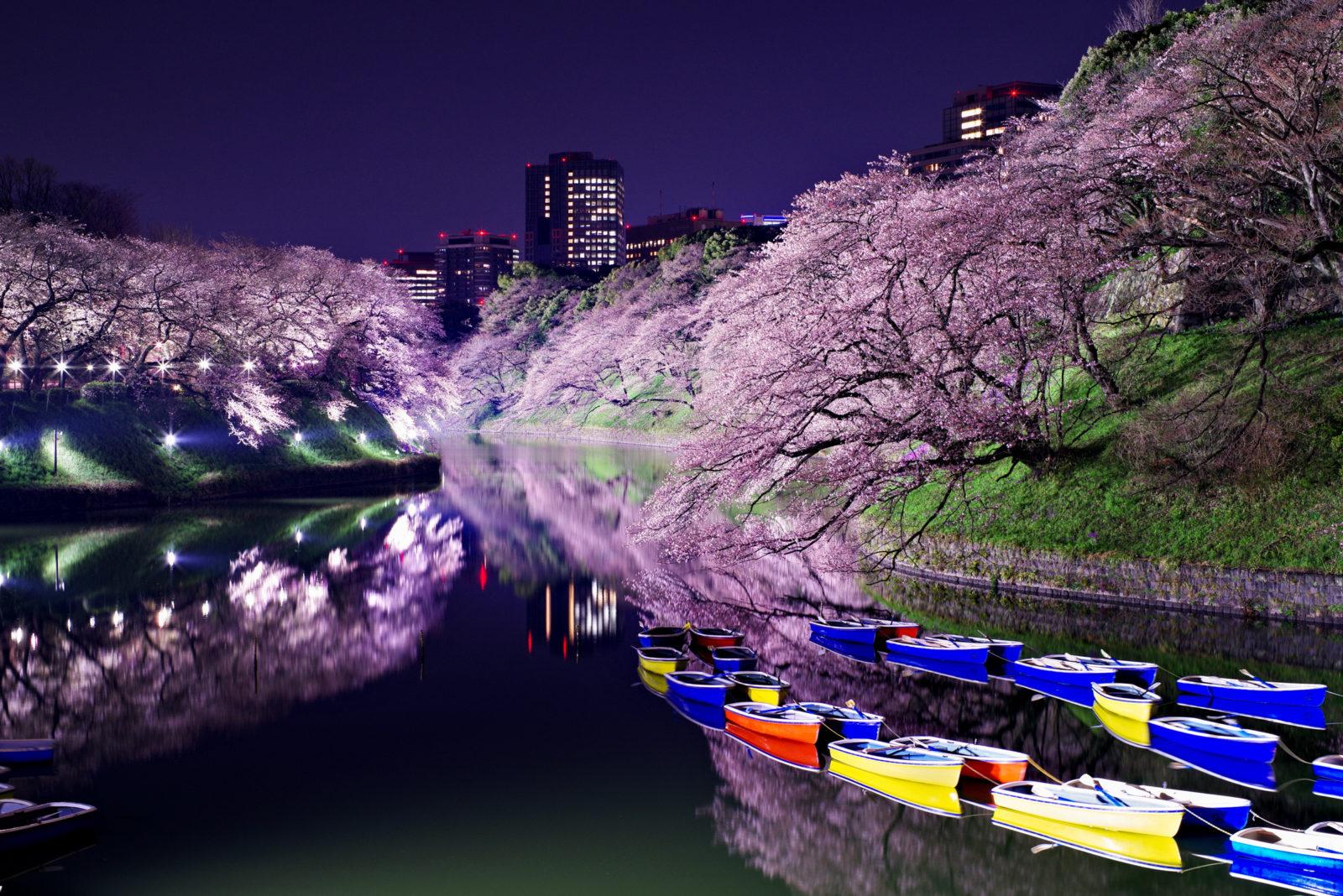 千鳥ヶ淵の桜ライトアップ | PENTAX K-1&FA50mm