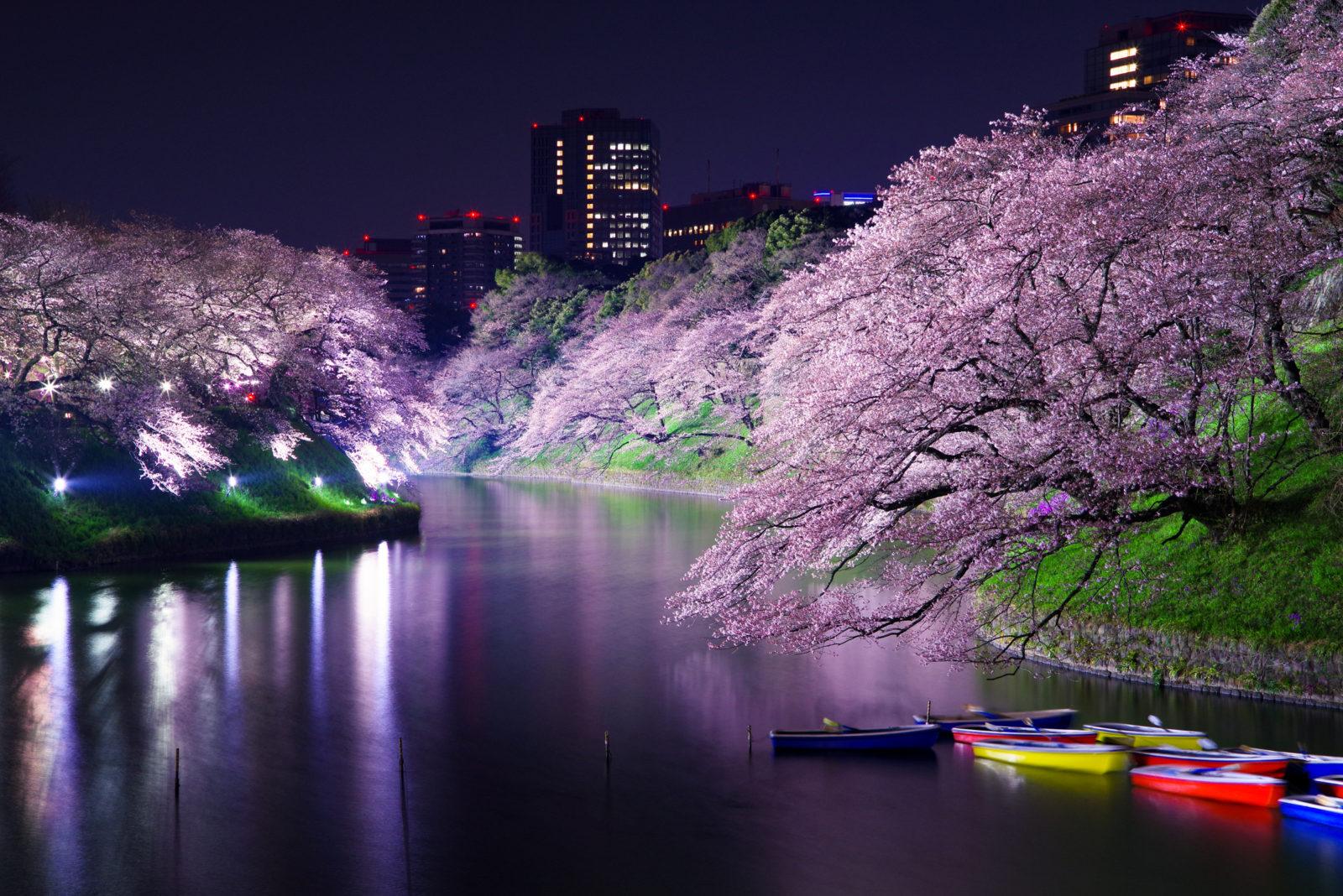 千鳥ヶ淵の桜ライトアップ | PENTAX K-1&FA★28-70mm