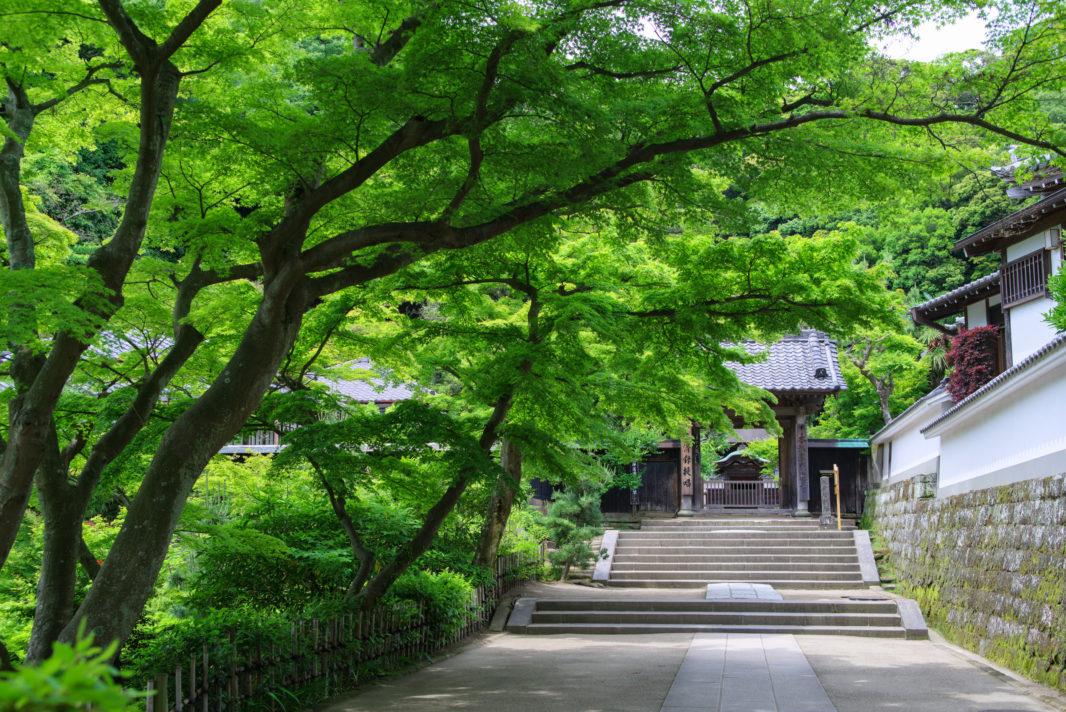 円覚寺の新緑 | PENTAX K-1&FA★28-70mm