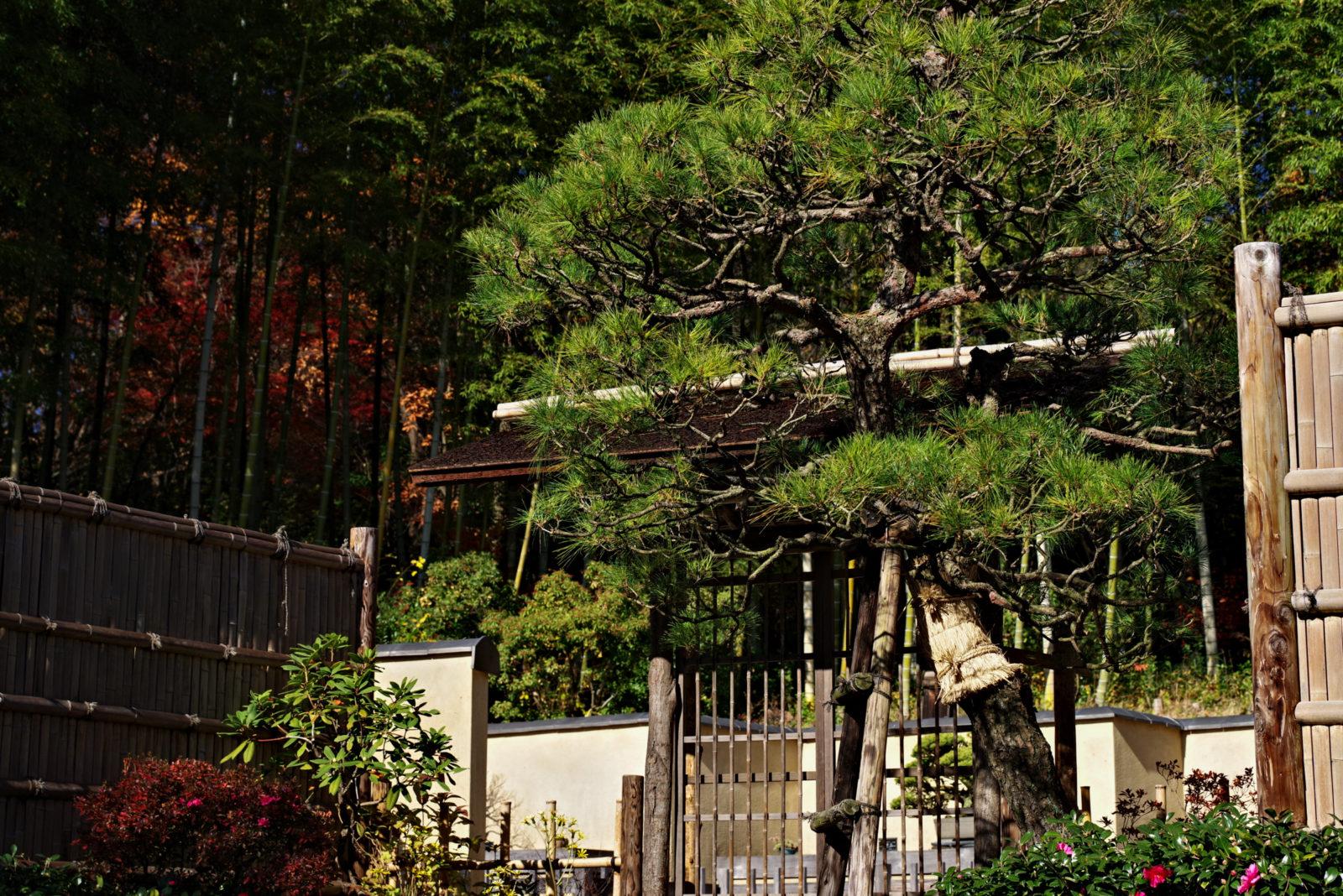 昭和記念公園 盆栽苑 | PENTAX K-1&D FA★70-200mm