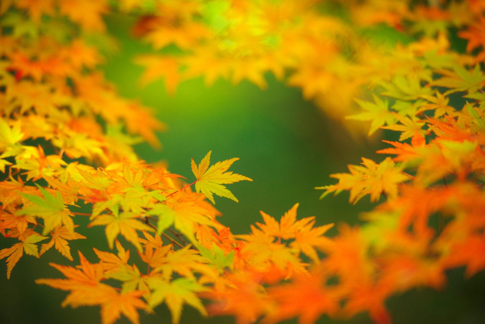 昭和記念公園の紅葉 | PENTAX K-1&D FA★70-200mm