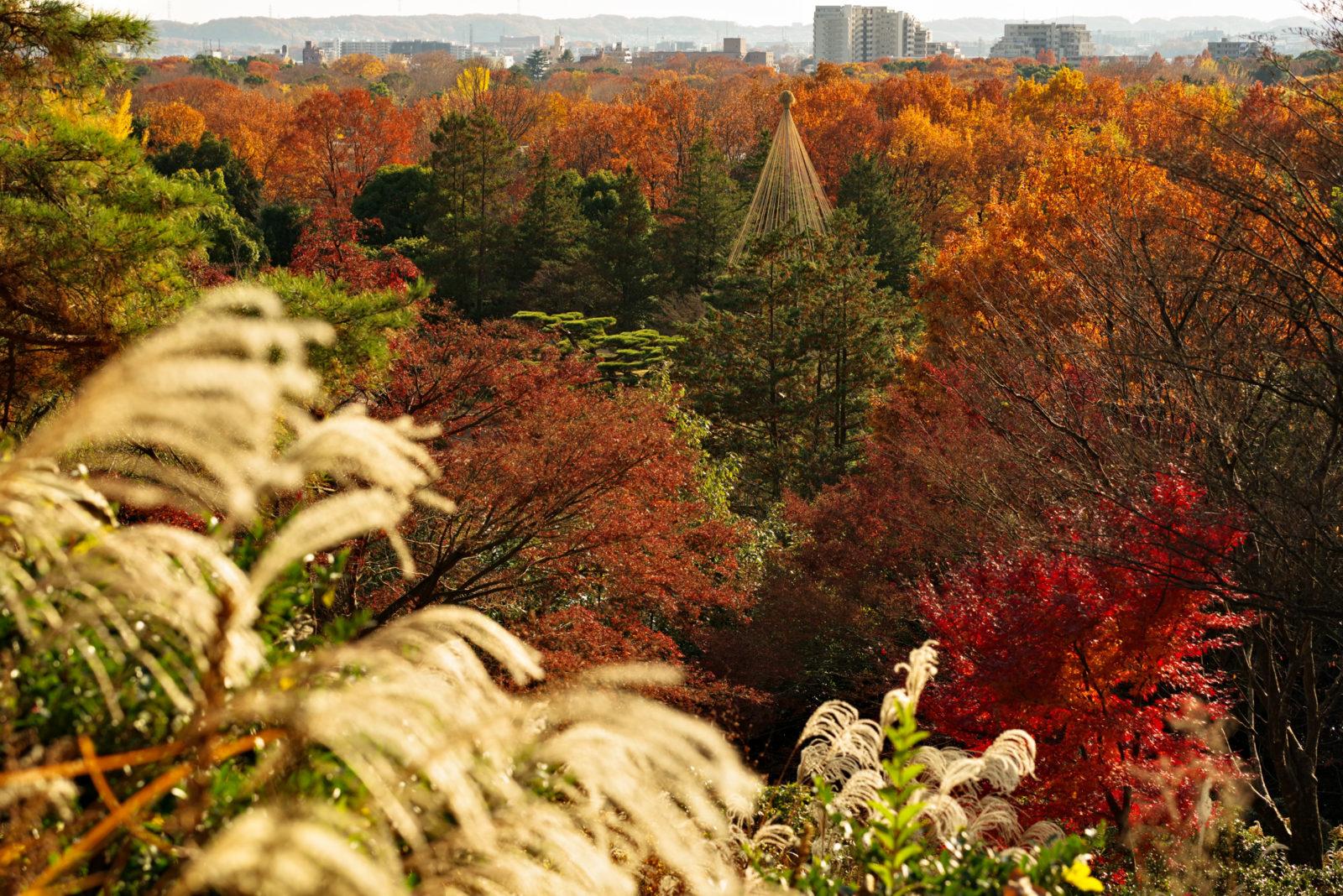 昭和記念公園 日本庭園 | PENTAX K-1&D FA★70-200mm