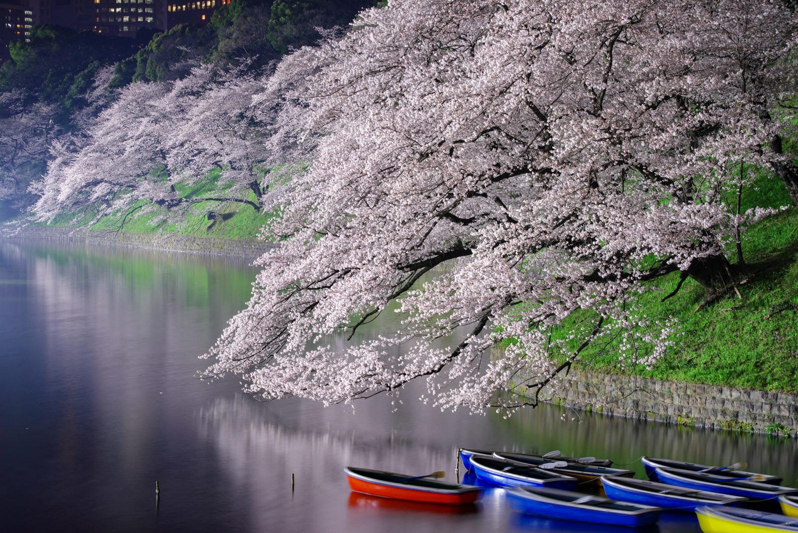 千鳥ヶ淵の桜ライトアップ | PENTAX K-1&D FA★70-200mm