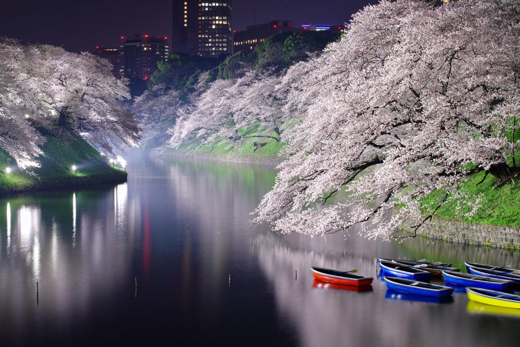 千鳥ヶ淵の桜ライトアップ   PENTAX K-1&D FA★70-200mm