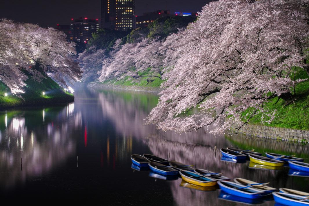 千鳥ヶ淵の桜ライトアップ2018 | PENTAX K-1&D FA★70-200mm