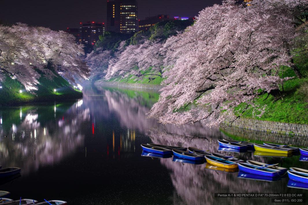千鳥ヶ淵の桜ライトアップ2018