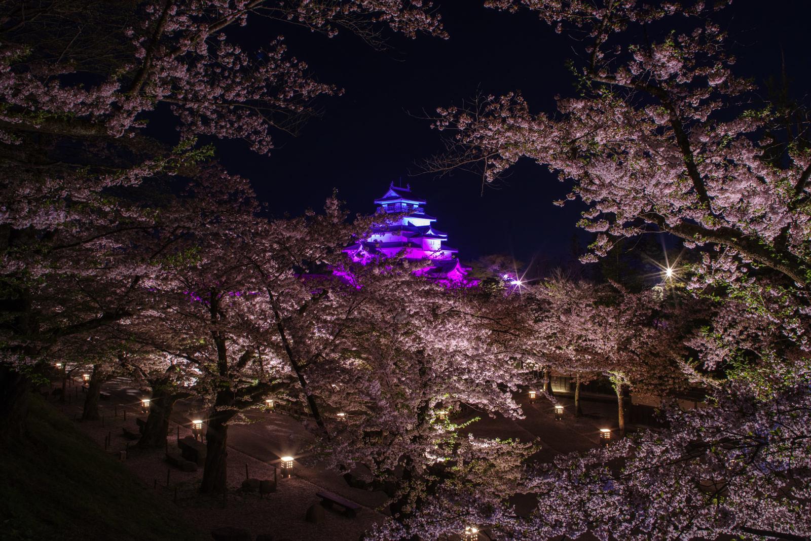 会津若松城の桜ライトアップ | PENTAX K-1&D FA★70-200mm