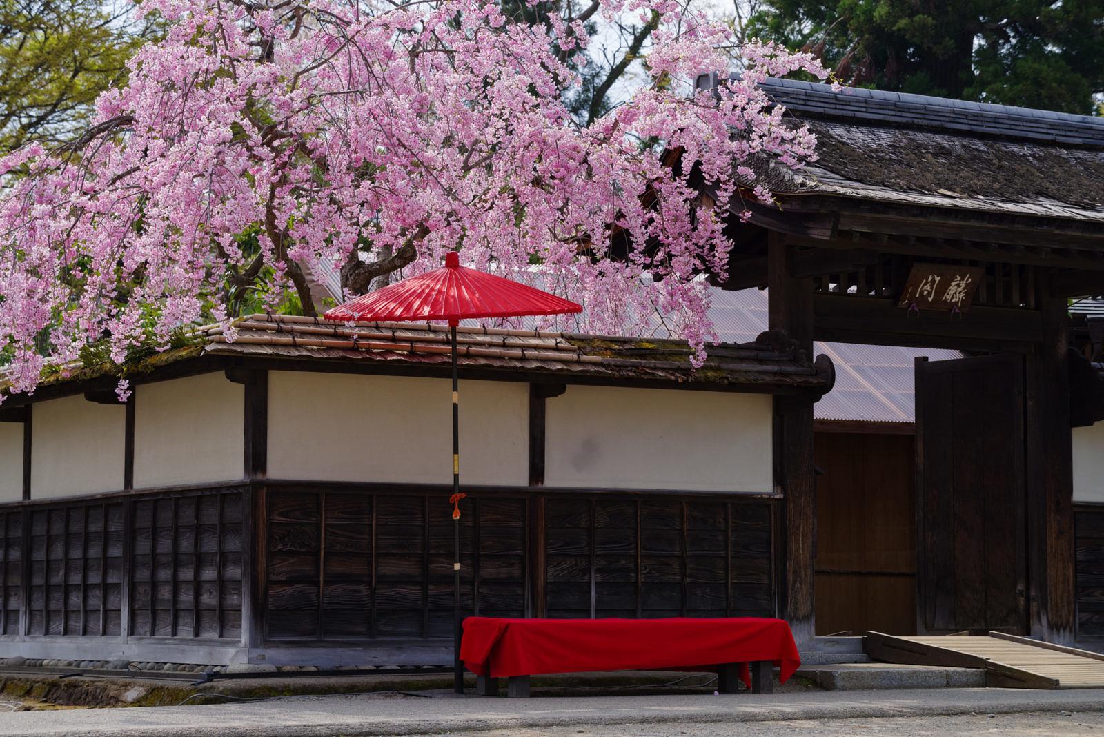 会津若松城の桜 | PENTAX K-1&D FA★70-200mm