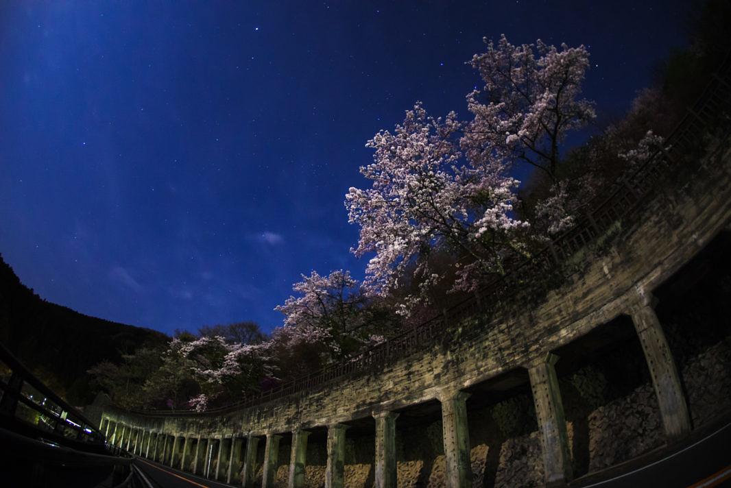 奥多摩湖の夜桜   PENTAX K-1&DA10-17mm