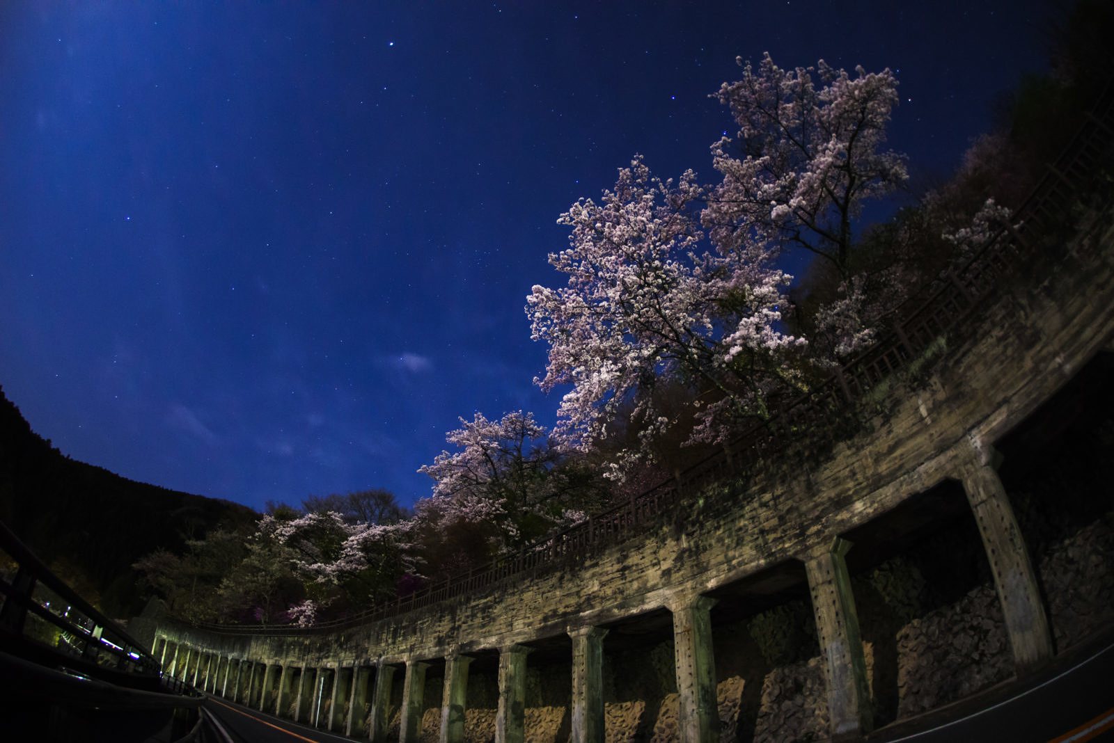 奥多摩湖の夜桜 | PENTAX K-1&DA10-17mm
