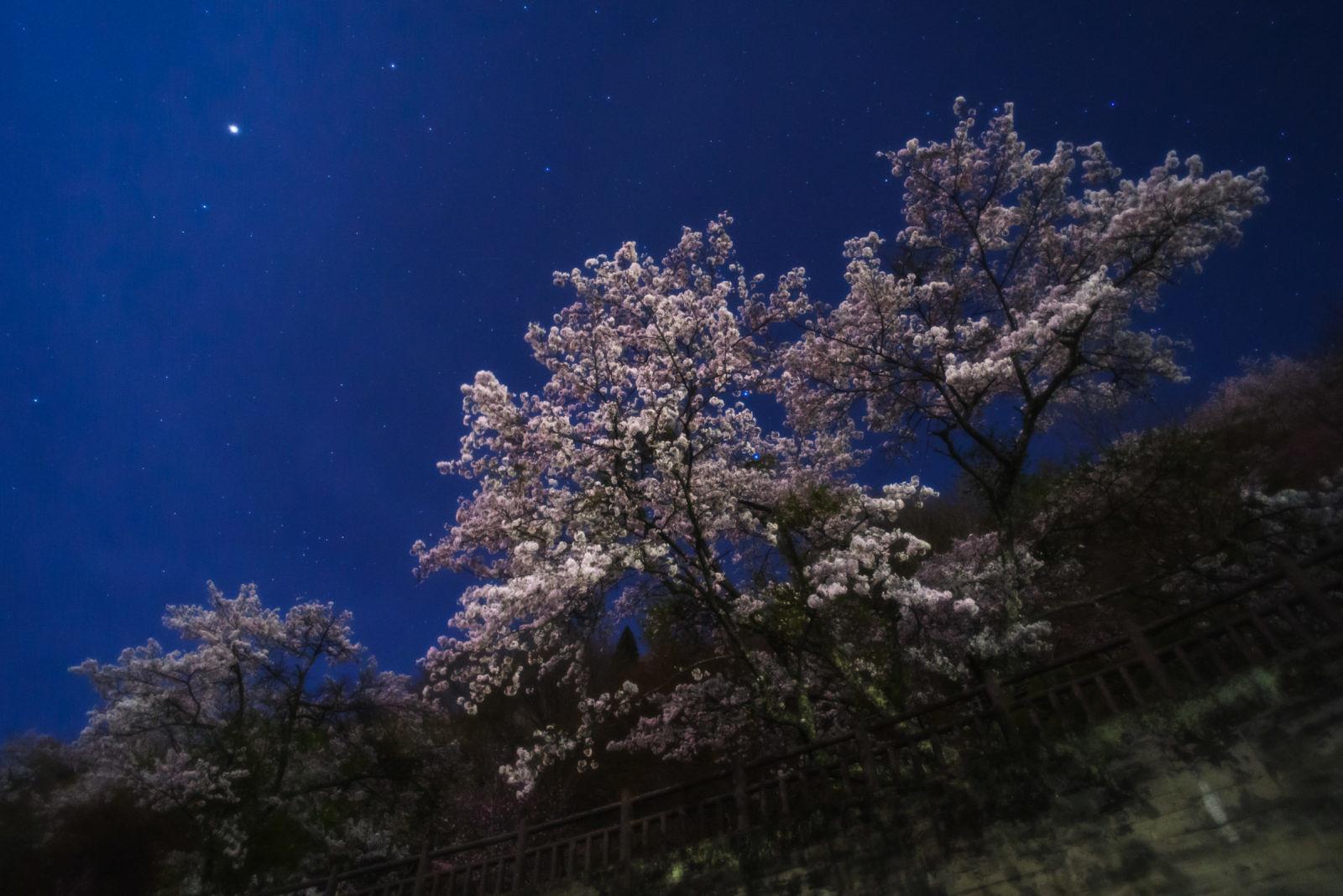 奥多摩湖の夜桜 | PENTAX K-1&FA20mm