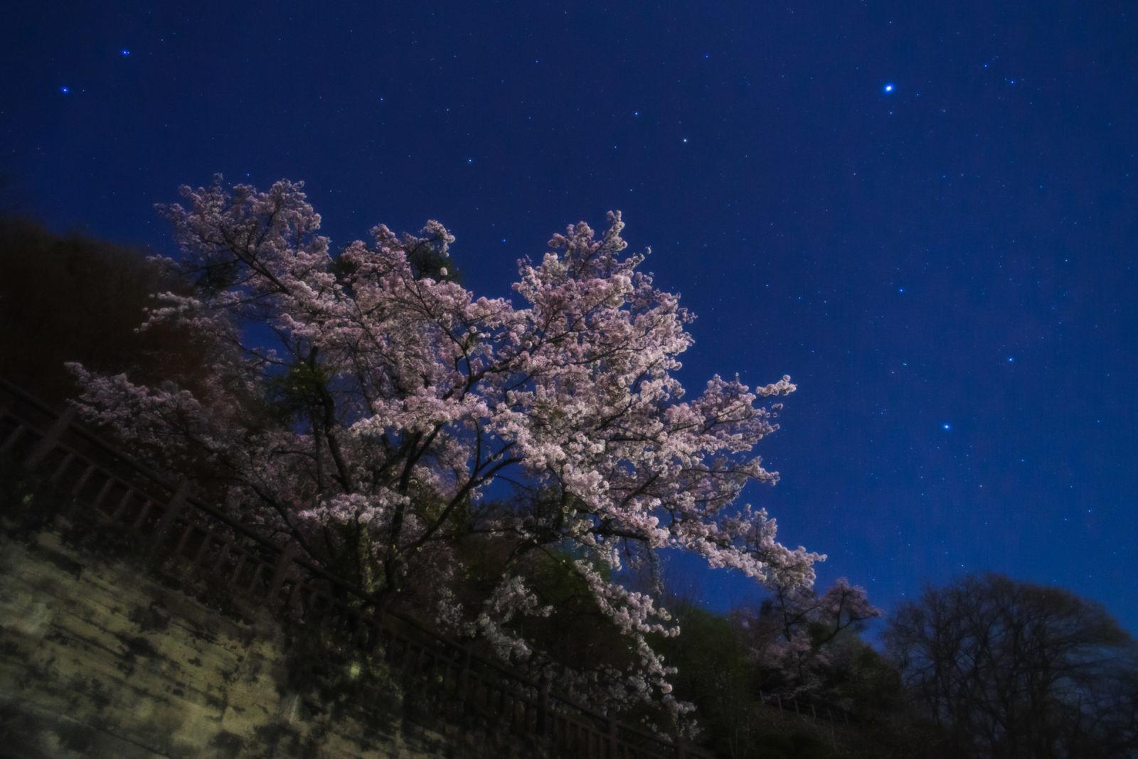 奥多摩湖の夜桜   PENTAX K-1&FA20mm
