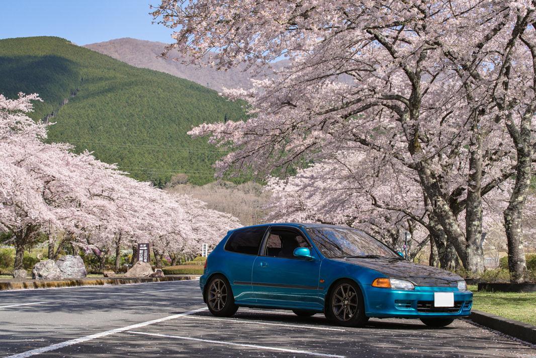富士霊園の桜と愛車EG6 | PENTAX K-1&D FA★70-200mm