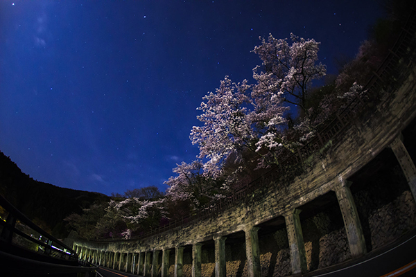 奥多摩湖の夜桜2018