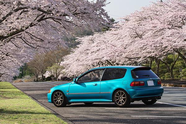 富士霊園の桜と愛車2018