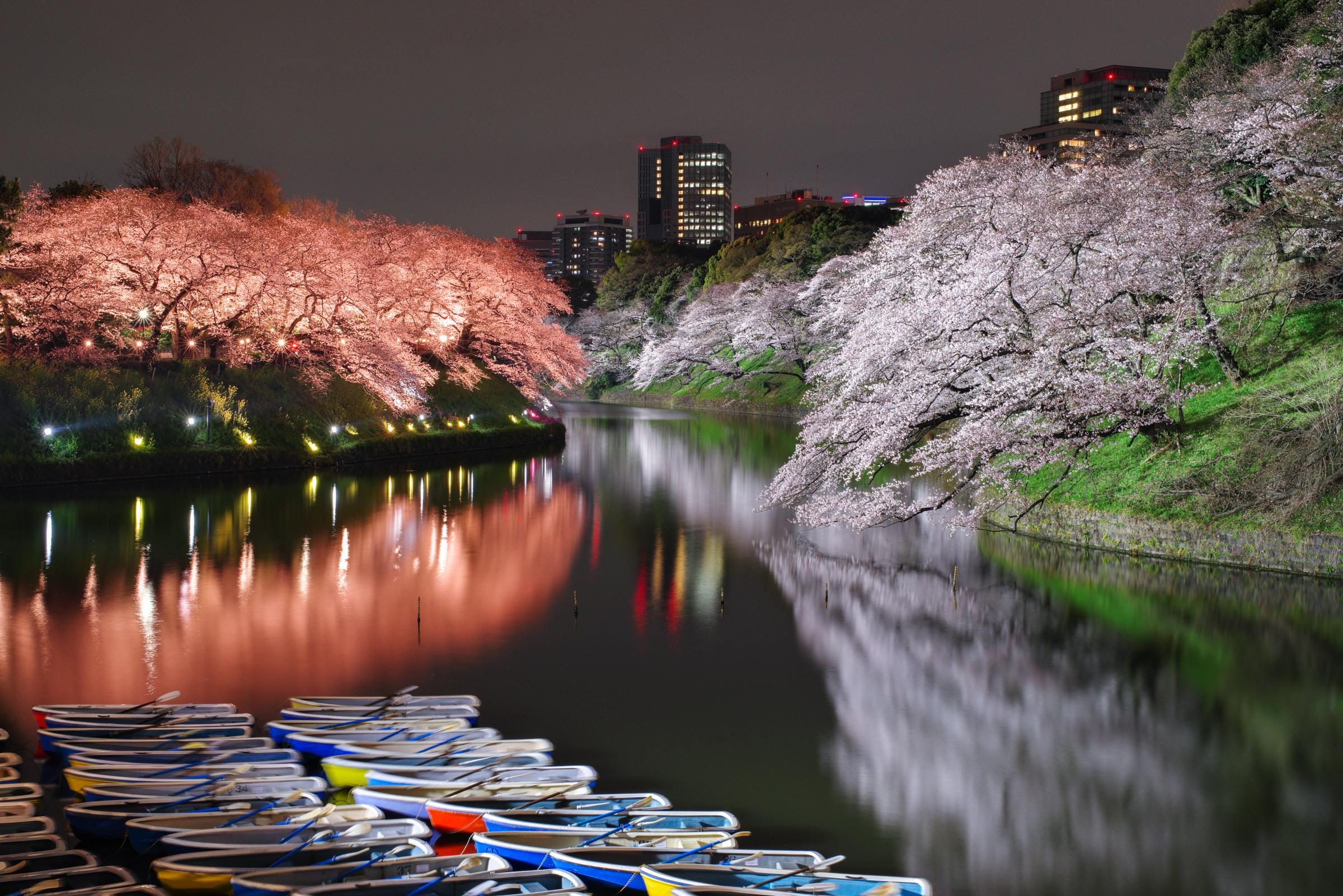 千鳥ヶ淵の桜ライトアップ2019 | PENTAX K-1&D FA★50mm