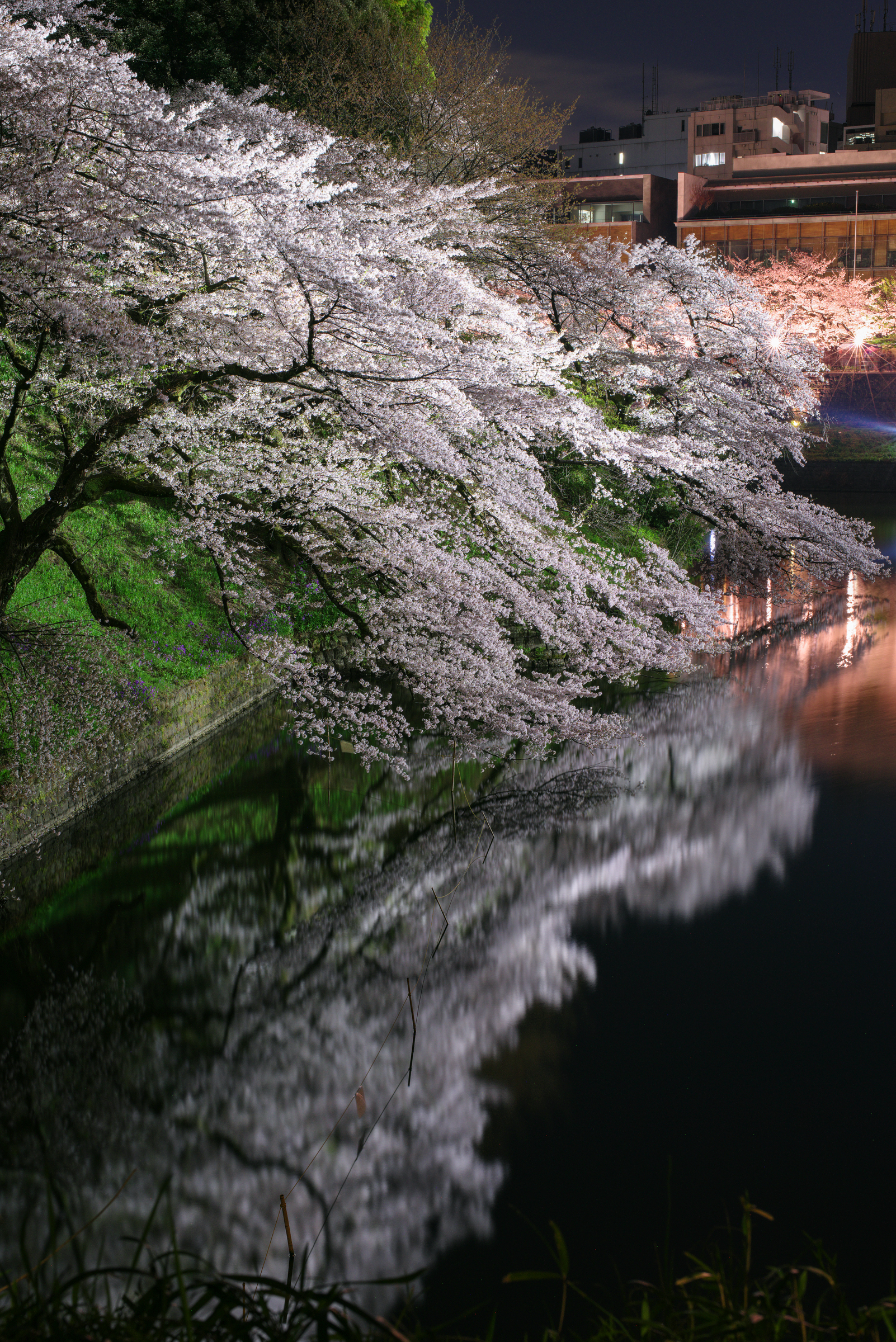 千鳥ヶ淵の桜ライトアップ | PENTAX K-1&D FA★50mm