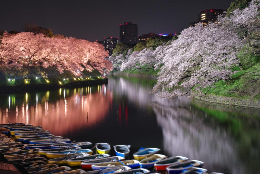 千鳥ヶ淵の桜ライトアップ2019   PENTAX K-1&D FA★50mm