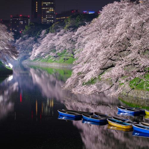 千鳥ヶ淵の桜ライトアップ