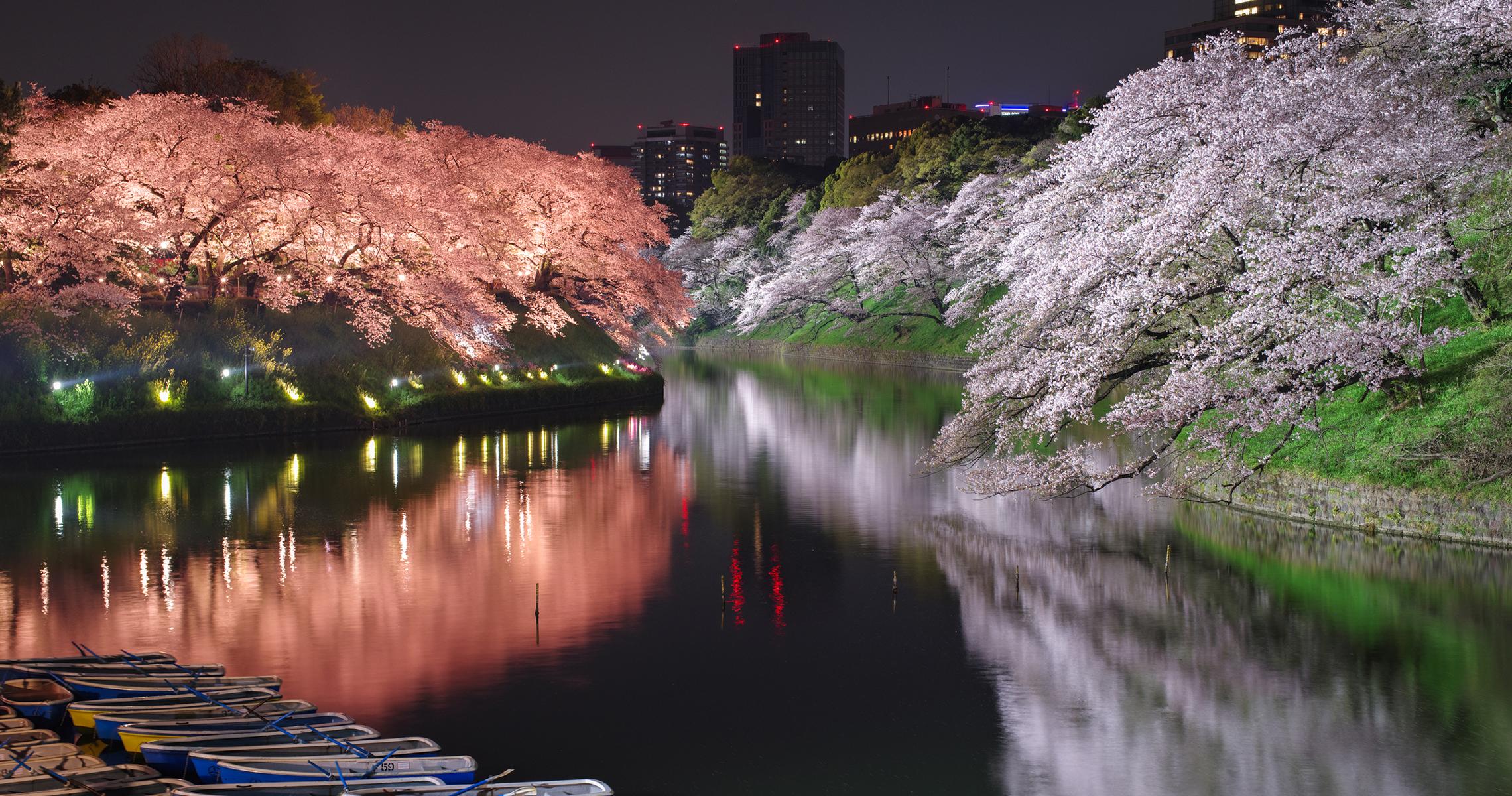 千鳥ヶ淵の桜ライトアップ2019